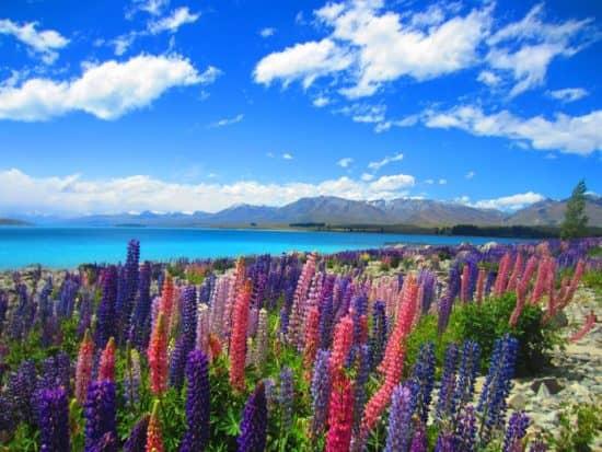 Отрасли, стимулируемые прямыми иностранными инвестициями в Новой Зеландии