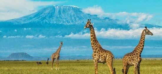 Свободные экономические районы: механизмы, которые помогли Танзании процветать