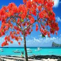 Инвестирование в недвижимость Маврикии
