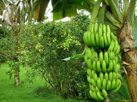 Сельскохозяйственная, коммерческая и промышленная аренда на родной земле