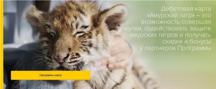 Социальный проект Амурский тигр от Россельхозбанка