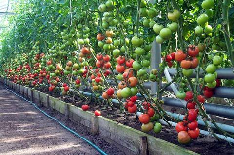 Второе место в мире по экспорту продовольствия занимает Голландия