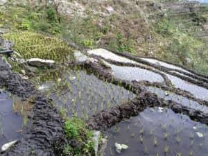 Новые дамбы ухудшили эффективность ирригационных систем в Непале