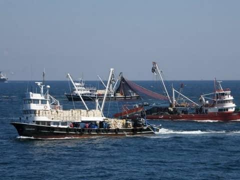Как турецкие рыбаки упорядочили вылов рыбы
