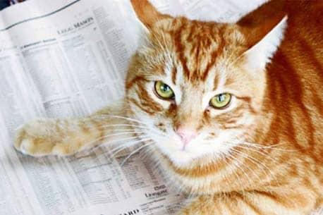 Почему кот Орландо переиграл профессиональных инвесторов?