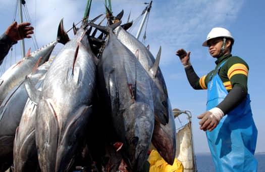 Как остановить бесконтрольный вылов рыбы: все дело в правах собственности